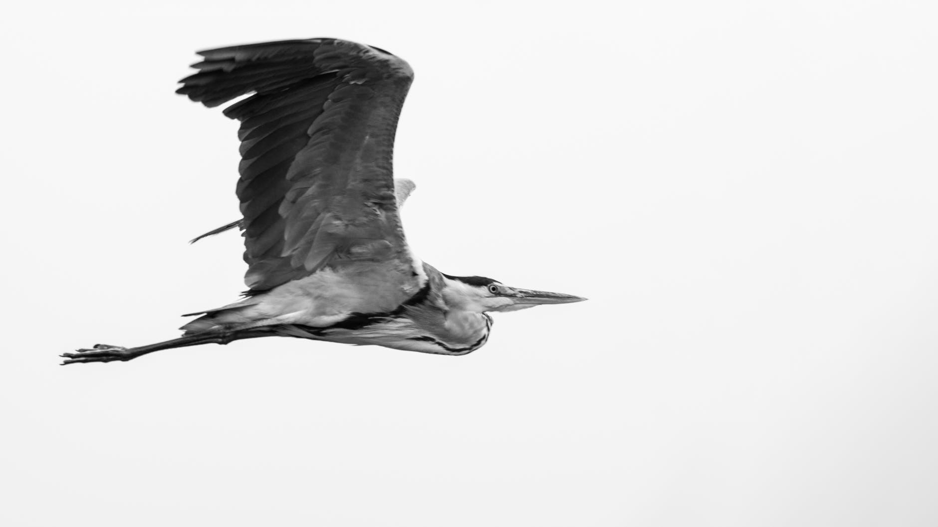 grayscale photography of flying bird on air